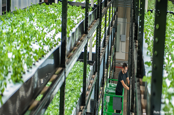 Towards New Growth Markets: Growing Agriculture Markets With Vertical Farms